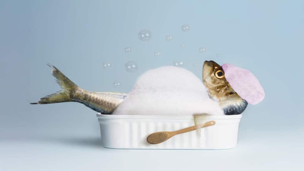 Wolt Koper dostava morske hrane